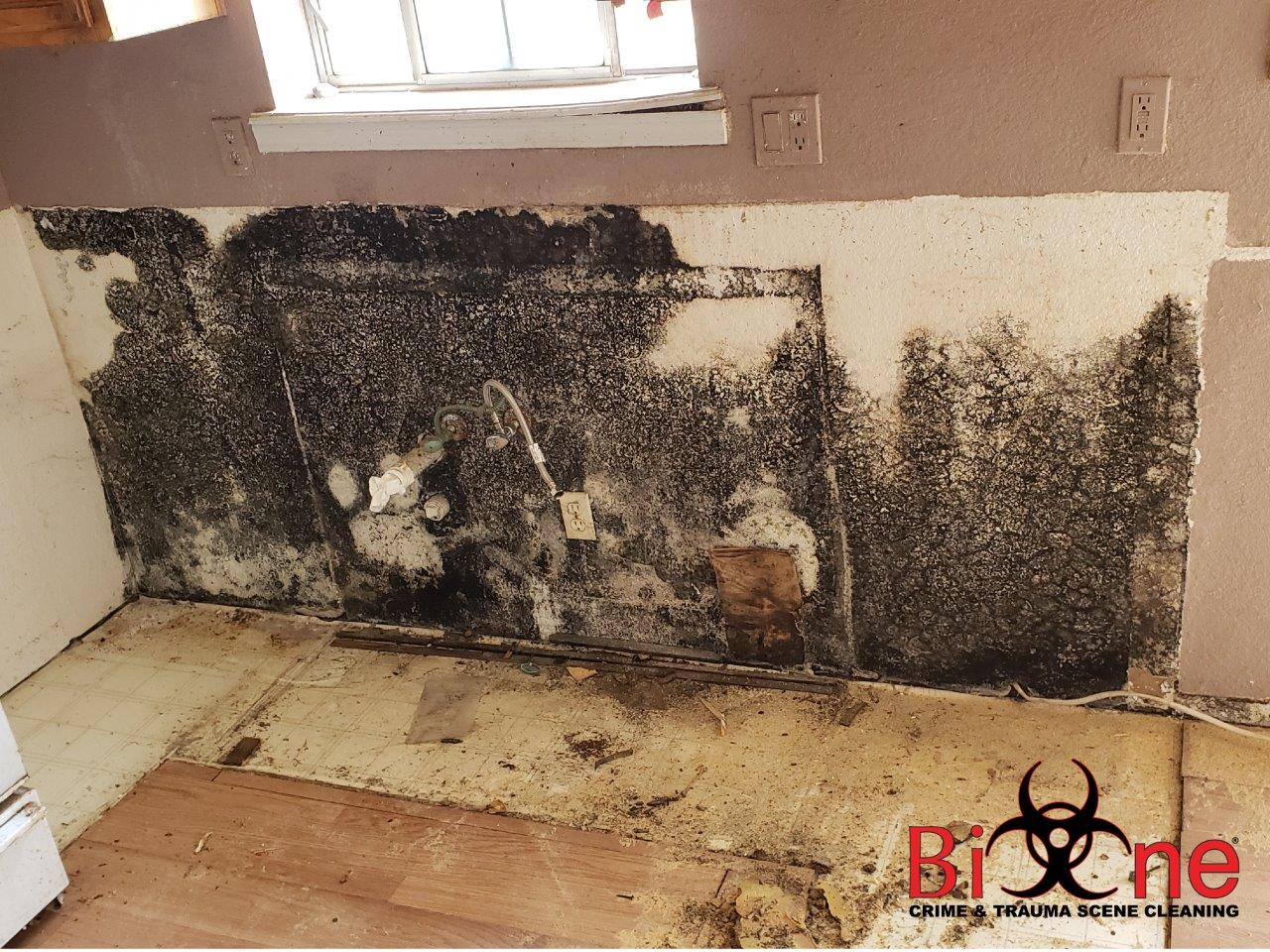 MOLD REMEDIATION - LEAVE IT TO THE PROFESSIONALS